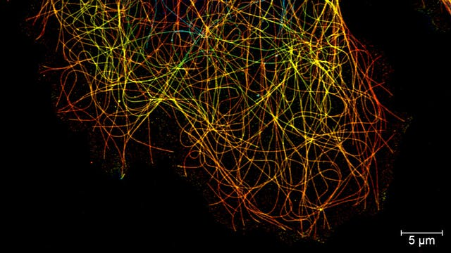 Lattice SIM: 3D image of microtubules, color coded for depth.