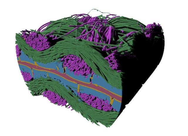 聚合物电解质燃料电池