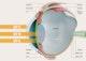 Dieses Schaubild zeigt, wie die UV-Strahlung ins Auge dringt und dort zu Schäden führen kann.