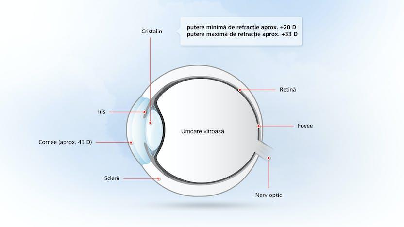 Structura ochiului uman. Cum funcționează ochiul uman - Lentile
